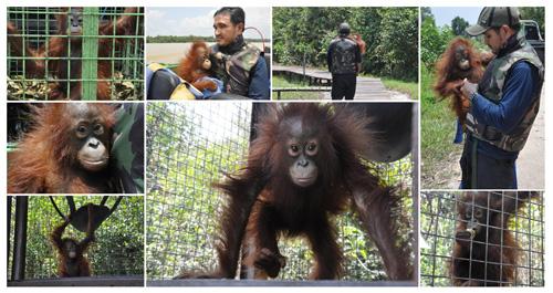 The Orangutan Foundation